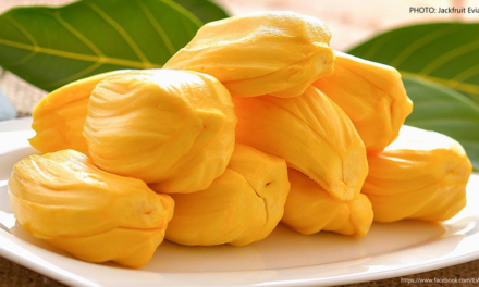BAR intensifies support to jackfruit R&D