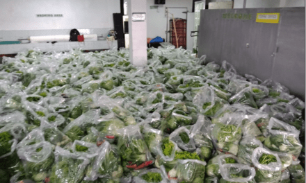 Cordillera Veggies Sold to Help Farmers During Lockdown