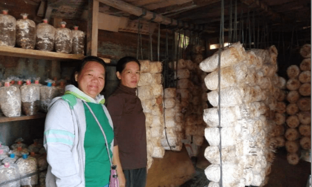 OYSTER MUSHROOMS DISTRIBUTED TO REGION 1