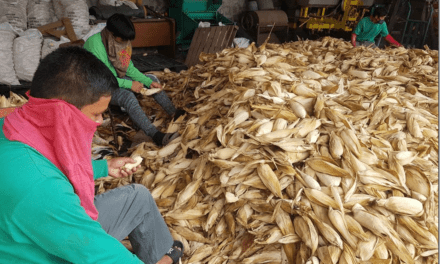CORN SEEDS DISTRIBUTED TO CALABARZON FARMERS
