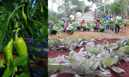 DOST REGION 10  DISTRIBUTES ORGANIC VEGETABLES TO BUKIDNON FRONTLINERS