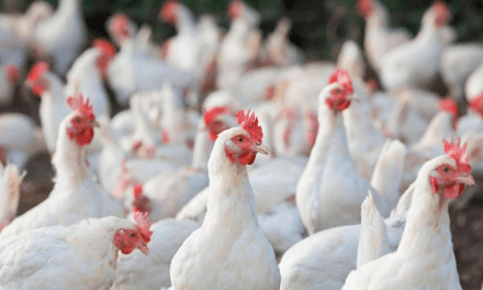 The Philippines is now free of the Avian Influenza (AI) A(H5N6) virus.