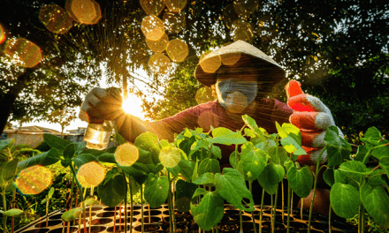 Filipinos bag awards in Southeast Asian photo contest on agri innovation
