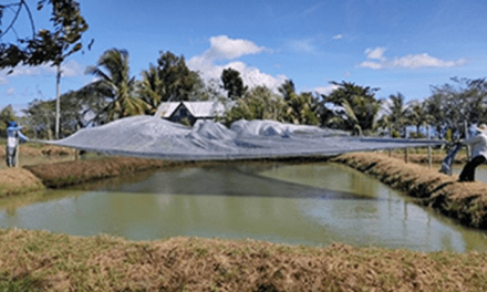 Tilapia growers in Luzon benefit from aquashade technology